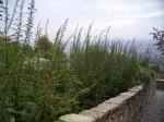 scalette,percorsi-verdi,antichi-percorsi